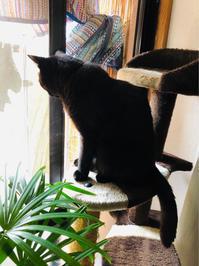 首が痛い - いぬ猫フェレット&人間