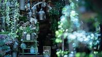 初夏の光蜥蜴と戯れる花屋さん - Soul Eyes