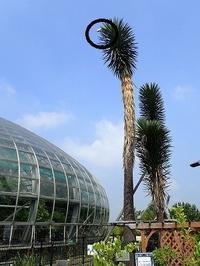「ユッカキタ~~~!!!」\(^o^)/ - 手柄山温室植物園ブログ 『山の上から花だより』