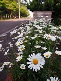 6月20日今日の写真 - ainosatoブログ02