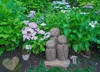 鎌倉・長谷寺の紫陽花② - エーデルワイスPhoto