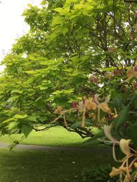 「木を植えることは未来を植えること」 - 暮らしのエッセンス   北鎌倉の山の家から