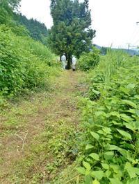 木道材料(主要木材)が届きました! - 浦佐地域づくり協議会のブログ