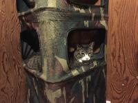 強面ビビリ王子の家猫修業記その29ついに - りきの毎日