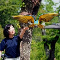 インコのフリーフライト - 動物園放浪記