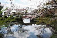 「桜」の反省会…⑦(改訂) - Taro's Photo