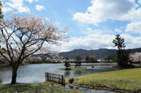 「桜」の反省会…⑧ - Taro's Photo