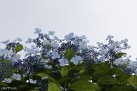 雨の季節ですが - Hibi*Photo ~Second season~