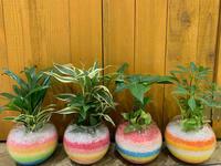夏といえば。。。 - ブレスガーデン Breath Garden 大阪・泉南のお花屋さんです。バルーンもはじめました。