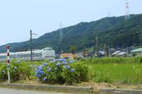 紫陽花電車と立葵電車 - SWAN