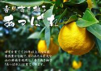 香り高き柚子(ゆず)着果の様子(2019)と生理落下 - FLCパートナーズストア
