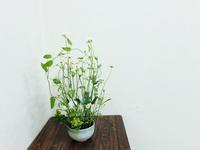 ナチュラルに♪ - Flower Days ~yucco*のフラワーレッスン&プリザーブドフラワー~