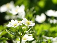 平標山のお花畑 - tokoya3@