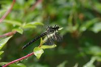 モイワの楽園–おまけ編- - 蝶と蜻蛉の撮影日記