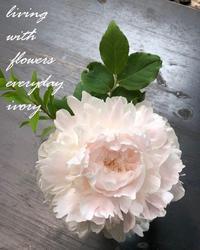 〜雪bolo 天然酵母のパン〜♬ -  Flower and cafe 花空間 ivory (アイボリー)