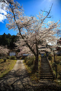 桜2019!~福徳寺~ - Prado Photography!