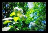 林の中の紫陽花 - Desire