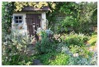 春の庭夏の庭それぞれの景色。 - natu     * 素敵なナチュラルガーデンから~*     福岡で庭造り、外構工事(エクステリア)をしてます