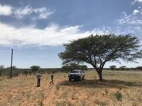 ナミビア旅行記(2) サバンナで虫探し - さぼってばかりの虫屋日記2