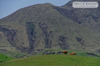 阿蘇山の牛たち - Mark.M.Watanabeの熊本撮影紀行