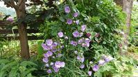 うんざり天気に咲く花と新しい長靴 - 今から・花
