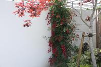 バラ咲き誇る中之条ガーデンズ③雨の和風ガーデン - 風の彩り-2