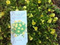 メカルドニア - だんご虫の花