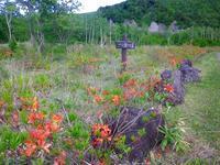 6月の乗鞍高原は、レンゲツツジの季節です! - 乗鞍高原カフェ&バー スプリングバンクの日記②