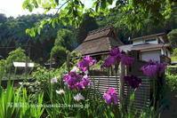 美山に行く3 - 写楽彩2
