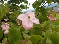ヤバボウシの花 - 日頃の思いと生理学・病理学的考察
