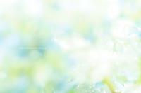 野沢温泉村庭のあじさいが色づいてきました。 - 野沢温泉とその周辺いろいろ2