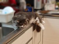 ひんやり - 猫に目薬