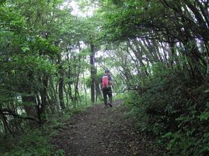 九千部岳のヤマボウシ - 信ちゃんの美夜古たより