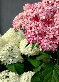 母の愛する花 - 赤煉瓦洋館の雅茶子