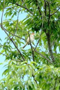 名前は何ですか?野鳥 - 平凡な日々の中で