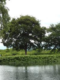 『木舟遊覧と半夏生(ハンゲショウ)と生き物達~』 - 自然風の自然風だより