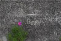 壁の花 - フォトな日々