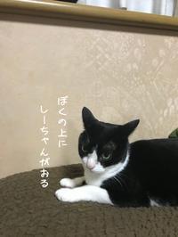 しーちゃんVSハチわっ!はやめましょう - gin~tetsu~nosuke