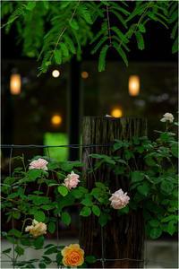 Rose&Cafe - 光のメロディー