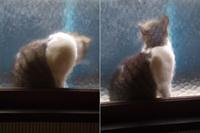 モザイク猫、久し振り - いぬのおなら