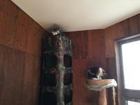 強面ビビリ王子の家猫修業記その31さらに夢じゃないよね - りきの毎日