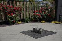 バラ咲き誇る中之条ガーデンズ④日差しの和風ガーデン - 風の彩り-2