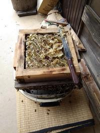 田舎便り120とろ~り蜂蜜、そしてらっきょう漬け - タワラジェンヌな毎日