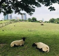 ロンドン最大級のシティー・ファームで動物と触れ合う~Mudchute Park & Farm~ - タワーブリッジの麓より