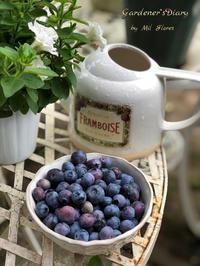 La cosecha de arándanos - Gardener*s Diary