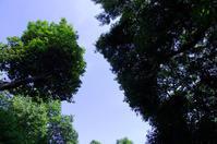 男山にて(2019/5/25)其の④ - 南の気ままな写真日記