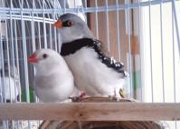 香川→山口→滋賀 - 犬と鳥と本と