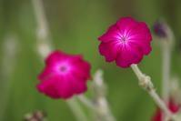 足立区東綾瀬公園の「赤い花」ばな。 - 一場の写真 / 足立区リフォーム館・頑張る会社ブログ