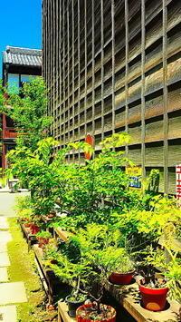 昭和路地風景 - 風の香に誘われて 風景のふぉと缶