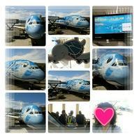 2019年5月『エアバスA380就航・日本帰国便に乗る ホノルル四日間の旅』⑦ - コグマの気持ち